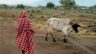 Pour sa dernière sortie, le label Scotch Bonnet propose un voyage depuis les rives de la Clyde de Glasgow vers l'Ouganda et le Kenya ! Là-bas, les chanteurs locaux ne […]